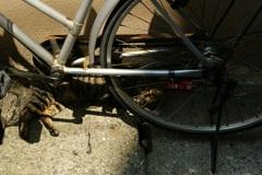 猫も、車輪も。