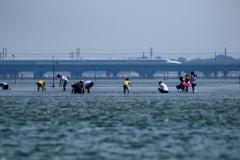 夏、浜名湖