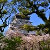 桜と青い空と小倉城 3