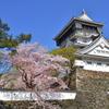 桜と青い空と小倉城 2