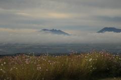 コスモスと雲海
