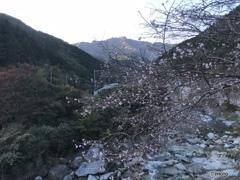 桜と秋の訪れ
