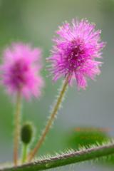 綺麗な花には棘がある