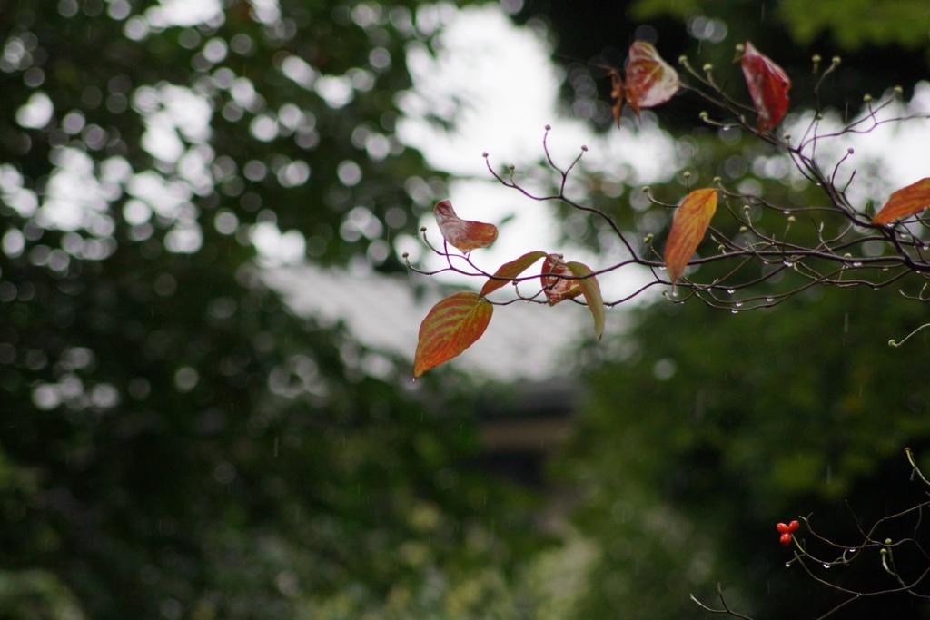 雨の井の頭公園にて