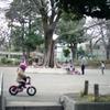 木を中心とした公園