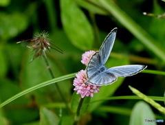 花と蝶19-20