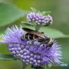 花と蜂20-④