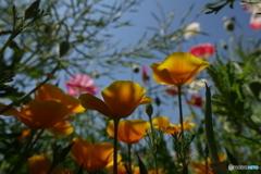 お花畑の森