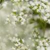 白い花に惹き込まれ
