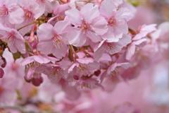 一歩ずつ春-3