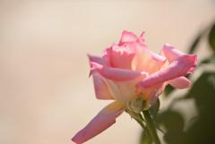 優しい花をあなたに