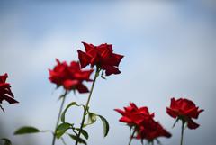 青空に咲け-1