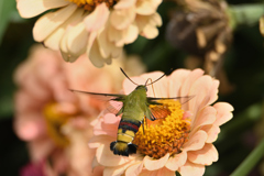 花には蛾も-3