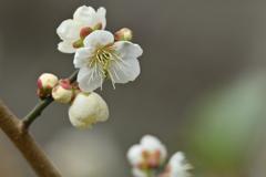 一歩ずつ春-4