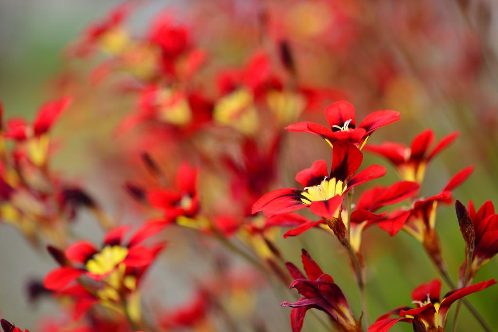 魅惑の花-1