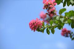 青空に咲け-2