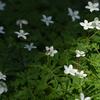 二輪草と花虻