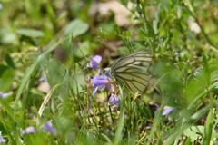 紫鷺苔に止まる-2
