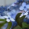 花に迷う-2