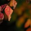 秋のクルクル