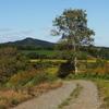 秋の田舎道