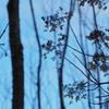 枯森に咲く