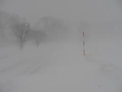豹変・冬散歩