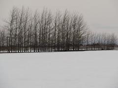 春分の田圃