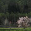 花咲く田舎