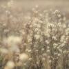 枯野の花束