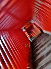 第二千二百二十二作 「登つても登つても 混沌として 赤鳥居」 島根県津和野