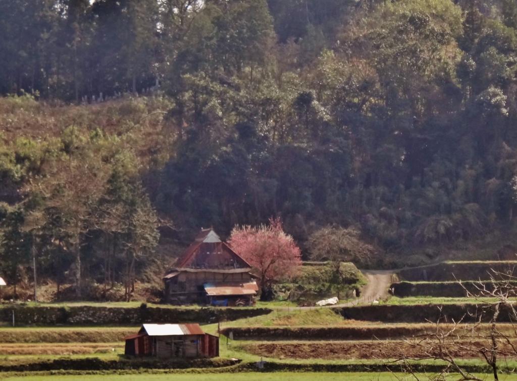 第千三百三十九作  「午后の陽やはらかく 里に春風 今やふやく」 大分県院内
