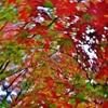 第二千三百三十一作 「渾然一体 秋色としてをく」 静岡県佐久間