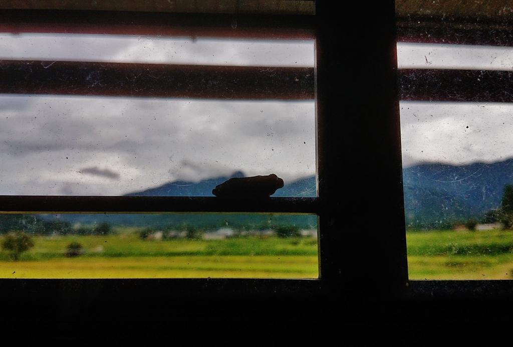 第二千二百五十九作 「降つたり止んだり 稲刈りまぢかの 蛙の仔」 福井県伏石