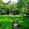 第二千五百三十作 「このところ 晴れ間嬉しい 小路ではある」 茨城県ひたちなか