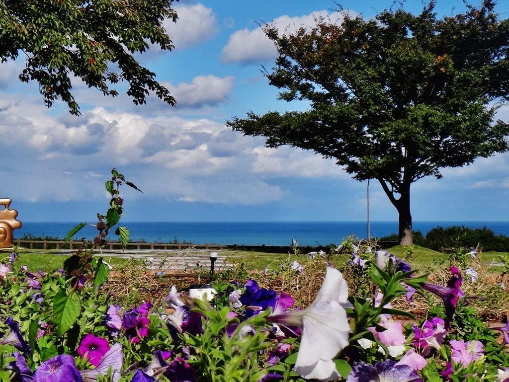 第二千三百一作 「海風に 揺らさる揺らさる 名も知らぬ花」 新潟県名立