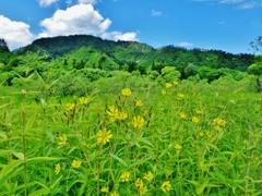 第二千百八十三作 「青空が うれしい頃の 花もわたしも」 福島県只見