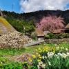 第二千百六作 「わが身ゆだねる 花の咲くがまま」 京都府美山
