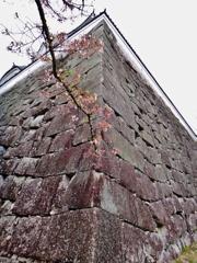 第二千四百六十七作 「咲きのこる 桜一枝の 石垣を見あげ」 三重県伊賀上野