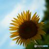夏の憧れ 1