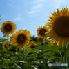 夏の憧れ 4