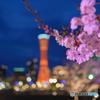 神戸咲く3