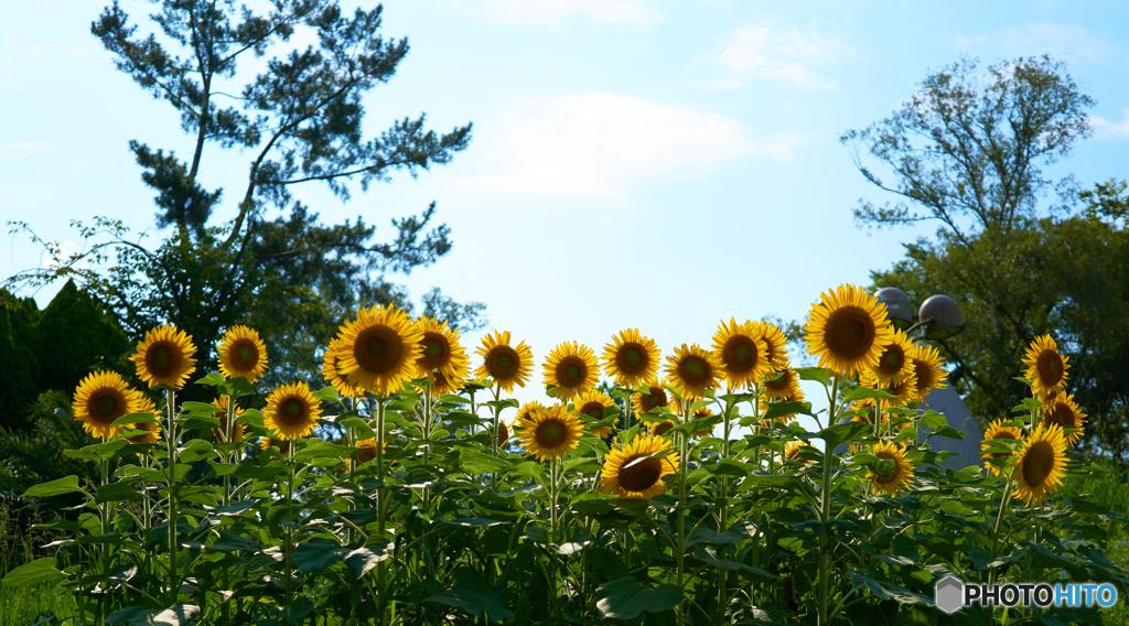 夏の憧れ 3