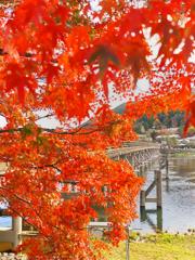Q、京都に何を見に行かれましたか?
