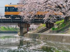 いつかの千本桜