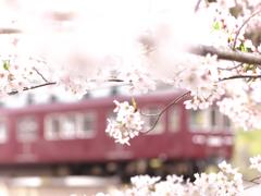 2021・マルーンの春 Ⅱ