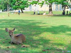 奈良の春日野 青芝に……