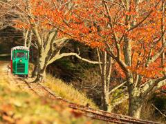 Cygnus forest railway