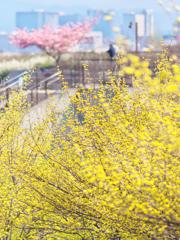 スカイパークの春