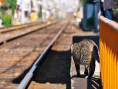 電車が来にゃい……
